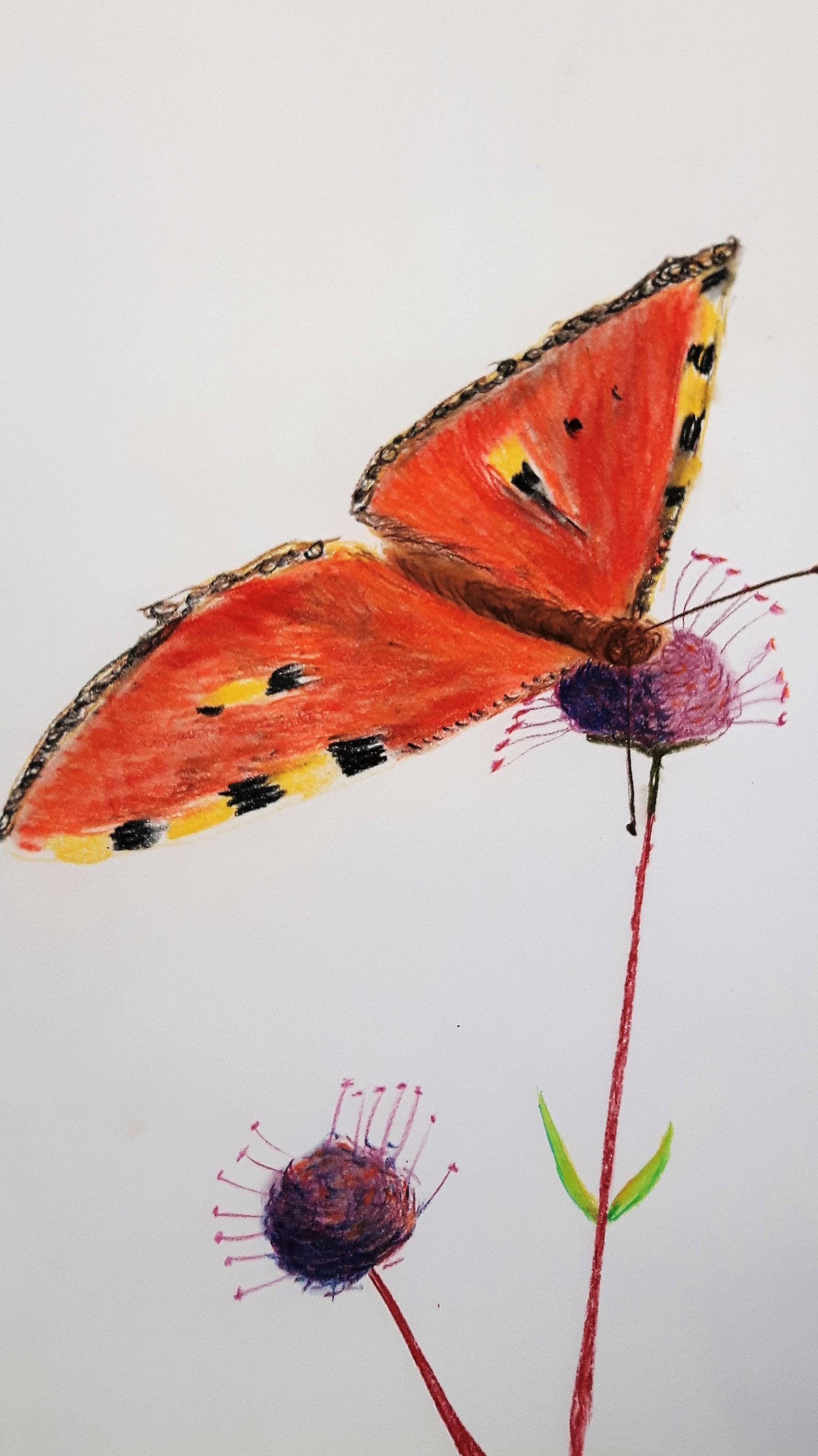 Pastellzeichnung auf Papier DINA3